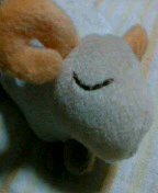 sleeping sheep。