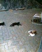 昨日の猫たち。