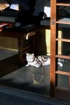Cat071125