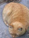 Cat070304