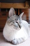 Cat07050403